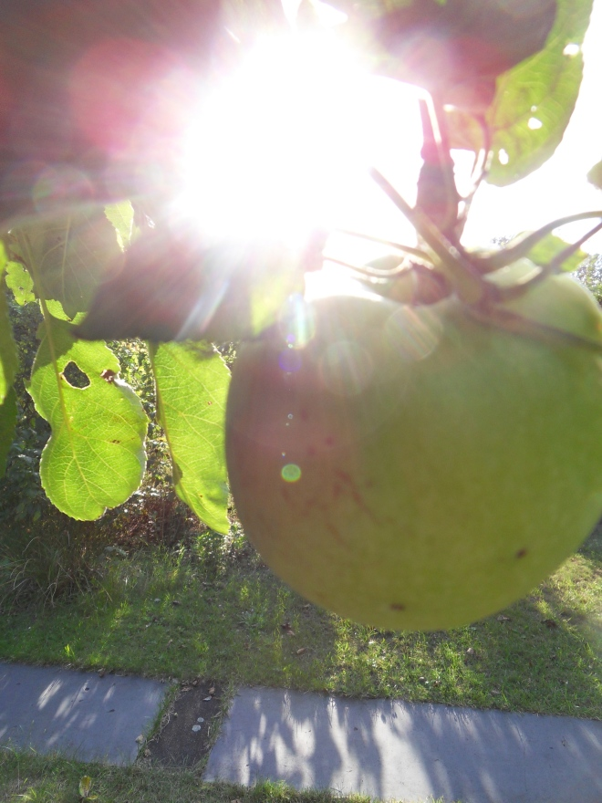 Sonnenbeschienener Apfel