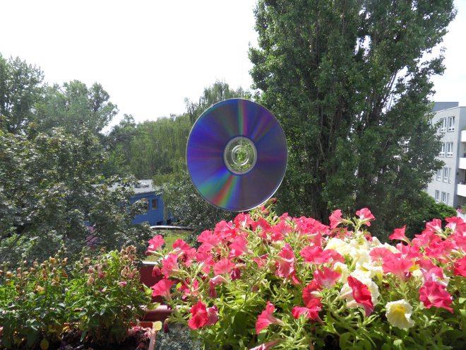 CD hängt am Faden über pinkfarbenen Petunien. Im Hintergrund Bäume