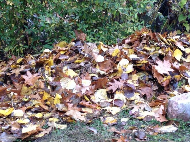 Blätterhaufen von Nahem