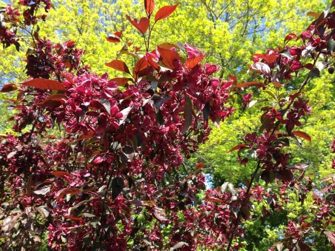 Pinker Baum vor grünem Blattwerk